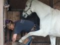 Paard bekappen
