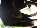 Paard Beslaan